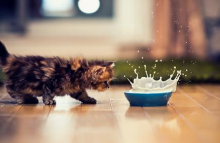 Pijesz wodę, a kotek pije mleczko? + KONKURS WEEKENDOWY