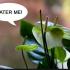 Rośliny też potrzebują wody! Mini poradnik ogrodnika :-)