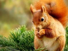 Zrób świąteczne porządki z Wiewiórką