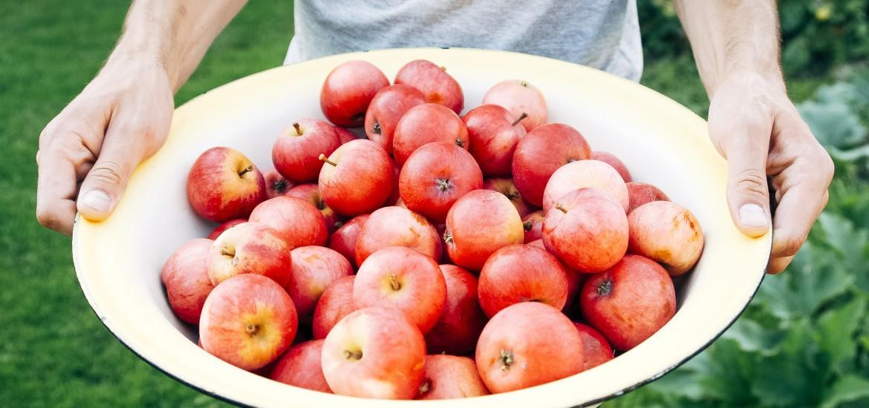 Zaprzyjaźnij się z jabłkami! To pyszne i zdrowe dary jesieni. Pomagają schudnąć i wzmocnić odporność. W 83% składają się z wody.