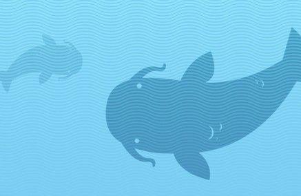 Jak ryba w wodzie? [Wodna Infografika]